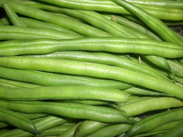 Vypěstovat klíčky fazolí mungo dokážou i děti